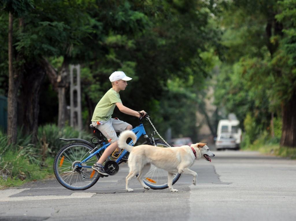 Kutya és gyerek, az idilli páros
